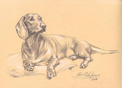 Doxie Drawing - Short-haired Dachshund On A Pillow by Alena Nikifarava