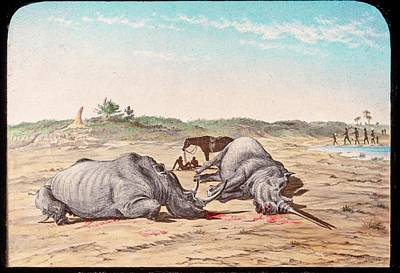 Rhinoceros Photograph - Shot White Rhinoceroses by Gustoimages/science Photo Libbrary