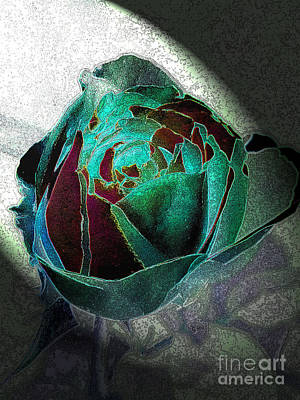 Roses Photograph - Showcase 1 by Diane DiMarco