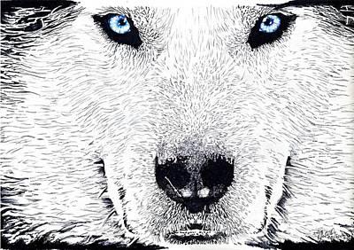 Siberian Husky Drawing - Siberian Husky  by Bill Richards