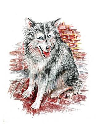 Siberian Husky Drawing - Siberian Husky by Deborah Willard