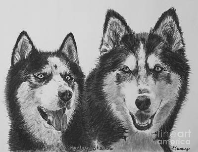 Siberian Husky Dogs Sketched In Charcoal Print by Kate Sumners
