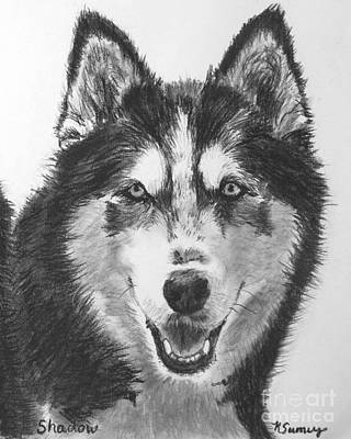 Husky Drawing - Siberian Husky Drawing by Kate Sumners