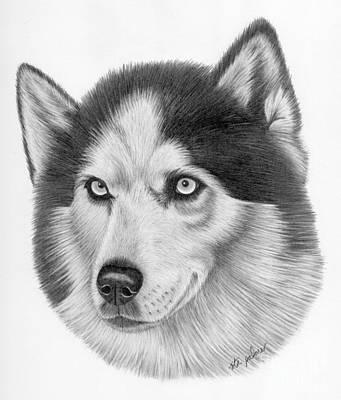 Siberian Husky Drawing - Siberian Husky by Rita Palmer