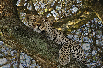 The Big Five Photograph - Siesta Time by Gary Hall