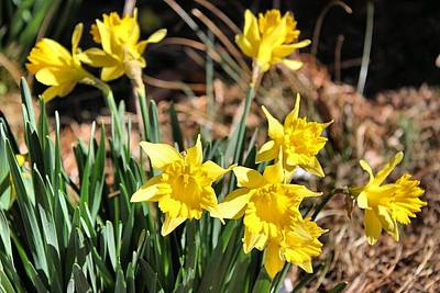 Sign Of Spring Print by Carolyn Ricks
