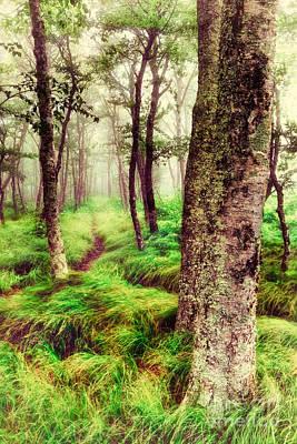 Silence In The Mist II Print by Dan Carmichael