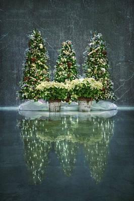 Poinsettia Photograph - Silent Night by Evelina Kremsdorf