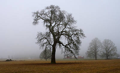 Harold Greer Photograph - Silhouette In Fog by Harold Greer
