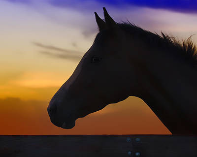 Silhouette Of A Horse At Sunset Print by Wolf Shadow  Photography