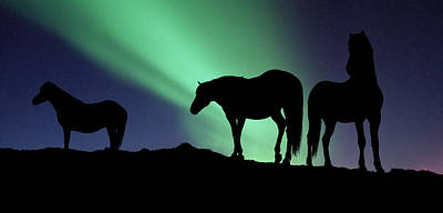 Silhouette Of Horses At Dusk, Iceland Print by Panoramic Images