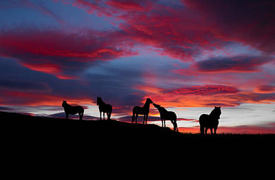 Silhouette Of Horses At Night, Iceland Print by Panoramic Images