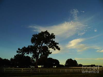 Nature Photograph - Silhouette Skyline by D Hackett