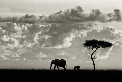 Savannah Photograph - Silhouettes Of Mara by Mario Moreno