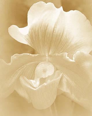 Flora Photograph - Silken by  The Art Of Marilyn Ridoutt-Greene