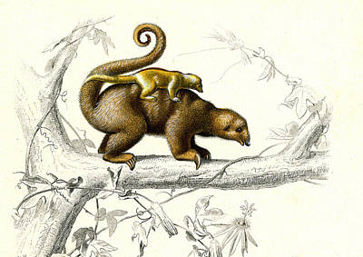 Silky Anteaters Print by Collection Abecasis