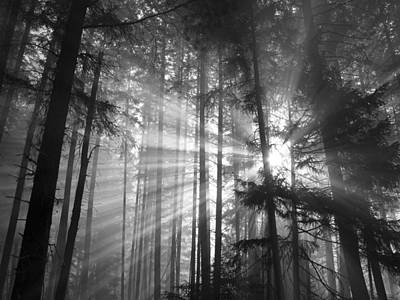 Silver Light Print by Diane Schuster