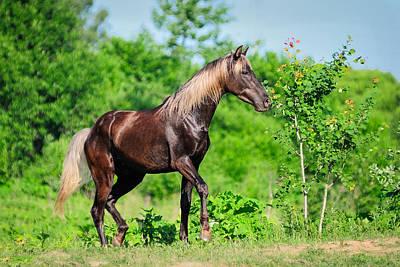 Horse Photograph - Silver Mane by Vadim Boytsov
