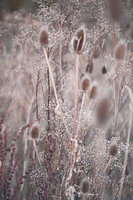 Silver Shades Of Wild Grass 2 Print by Jenny Rainbow