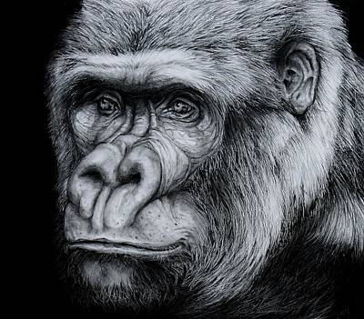 Gorilla Drawing - Silverback - A Drawing by Jean Cormier