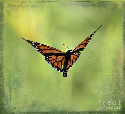 Monarch Photograph - Simple Blessings  by Kerri Farley