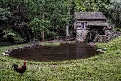 Rooster Photograph - Simple Country Life by Susan Candelario