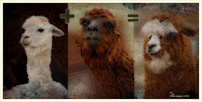 Llama Digital Art - Simple Math - Featured Comfortable Art And Feature In Nature Photography Groups by EricaMaxine  Price