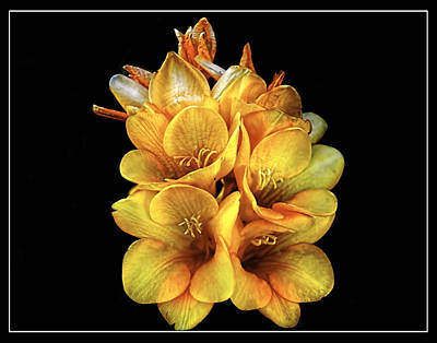 Oldzero Photograph - Simple Yellow Flower by Steve Benefiel