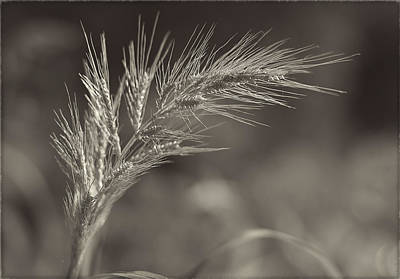 Photograph - Simplicity by Ivelina G