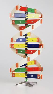 Heredity Photograph - Simplified Colourful Model Of Dna by Dorling Kindersley/uig