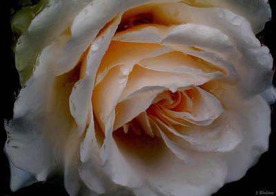 Jordan Painting - Simply The Rose - Flower Art by Jordan Blackstone