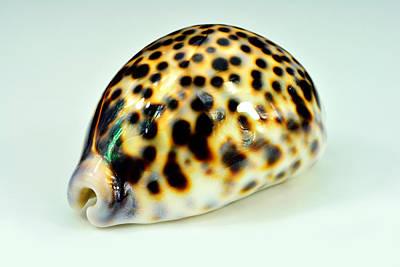 Singel Colorfull Shell Original by Toppart Sweden