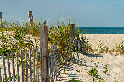 Fence Posts Photograph - Singer At The Shore by Michelle Wiarda