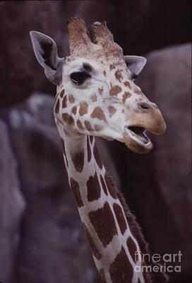 Singing Giraffe Print by Anna Lisa Yoder