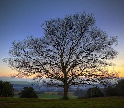 Single Bare Winter Tree Against Vibrant Sunset Print by Matthew Gibson
