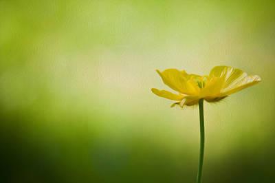 Natuure Photograph - Single Buttercup Digital Painting by Matthew Gibson