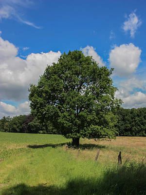 Single Tree Agricultural Landscape Print by Ann Sophie Fritsch