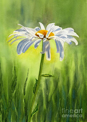 Floral Watercolor Painting - Single White Daisy  by Sharon Freeman