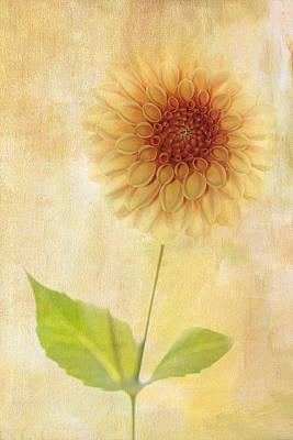 Single Yellow Dahlia Print by Rebecca Cozart