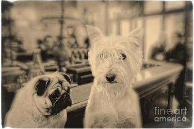 Westie Terrier Photograph - Singles Night by Edward Fielding
