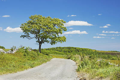 Sinlge Tree And Dirt Road  In Spring Blueberry Field Maine Print by Keith Webber Jr