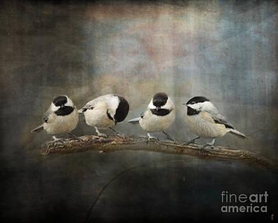Chickadee Photograph - Sisterhood by Jai Johnson