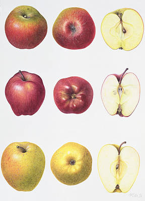 Food And Beverage Drawing - Six Apples by Margaret Ann Eden