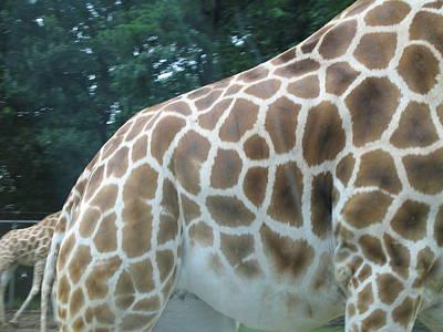 Adventure Photograph - Six Flags Great Adventure - Animal Park - 121240 by DC Photographer