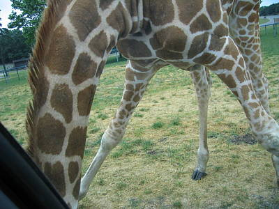 Six Flags Great Adventure - Animal Park - 121245 Print by DC Photographer