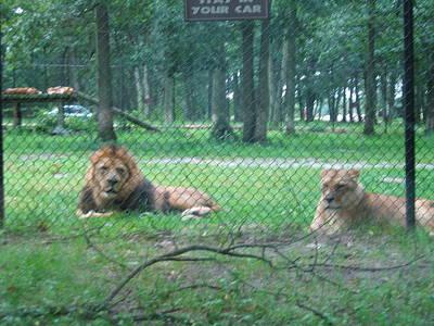 Nj Photograph - Six Flags Great Adventure - Animal Park - 121253 by DC Photographer