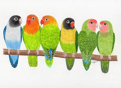 Lovebird Drawing - Six Lovebirds by Rita Palmer