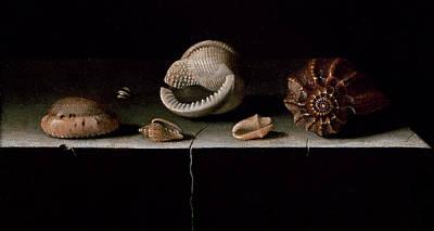 Six Shells On A Stone Shelf Print by Adrian Coorte