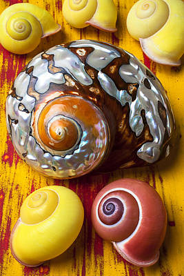 Six Snails Shells Print by Garry Gay