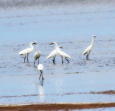 Bird Photograph - Six White Egrets by Cathy Lindsey